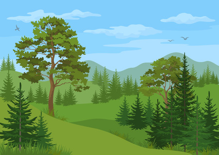 Landscape with Coniferous and Deciduous Trees, Grass, Mountains and Blue Cloudy Sky with Birds. Vector Illustration