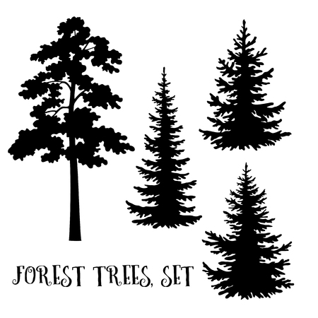 Fir and Pine Trees set, Black Silhouettes Isolated on White Background. Vector