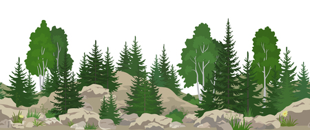 Seamless Horizontal Summer Mountain Landscape with Birch and Fir Trees, Green Grass on the Rocks. Vector
