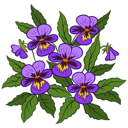 Flowers Pansies, Viola, Green Leaves and Violet Petals Isolated on White Background. Vector