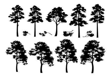 Pine Trees and Branches, Set Black Silhouettes Isolated on White Background. Vector