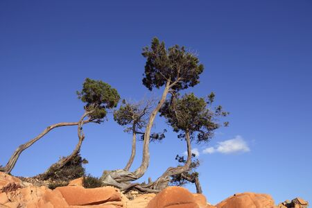 rock bottom: the 3 pines on the rocks Stock Photo