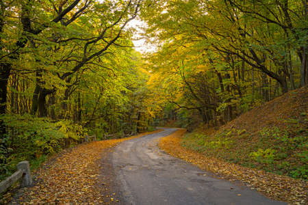 Beautiful forest in the autumn. Bright, colorful picture. Asphalt road in the woods. Dried yellow and brown leaves on the side of the road. Stock fotó