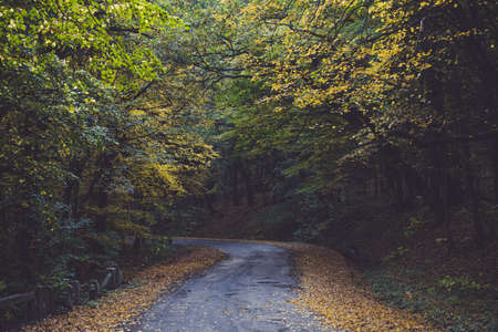 Beautiful forest in the mountains in autumn. Asphalt road in the woods. Dried yellow and brown leaves on the side of the road.