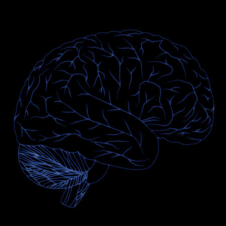 Human brain isolated on black background  Neon blue  photo