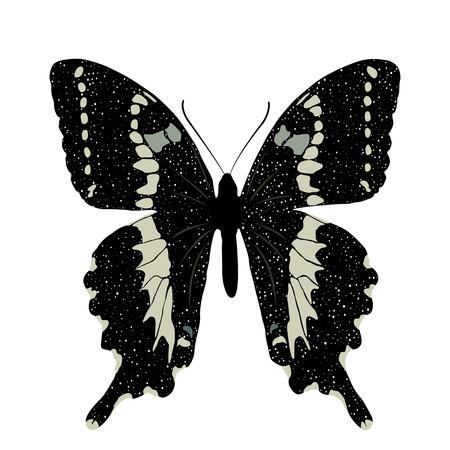 Бабочка на белом фоне. Вектор EPS10. Иллюстрация