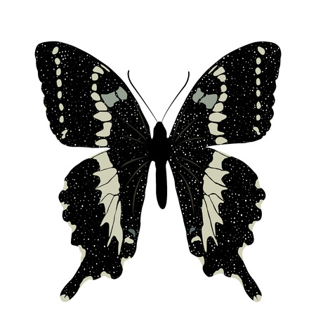 Butterfly isolated on white background. Vector EPS10. Illustration