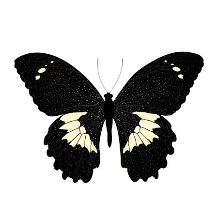 Butterfly isolated on white background.  Vector