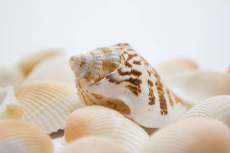 Different soft colored seashells on a white background. photo
