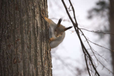 Nearly hand protein famously jumps on the tree. Ignoring it runs up or down.