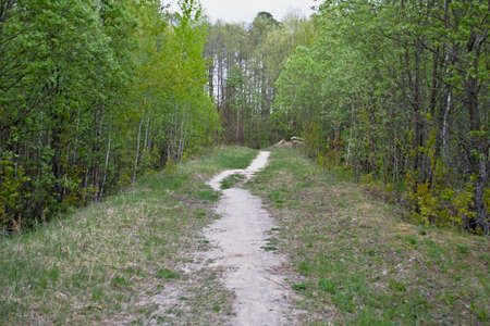 The forest path in the forest will be an excellent backdrop for the natural composition. Фото со стока