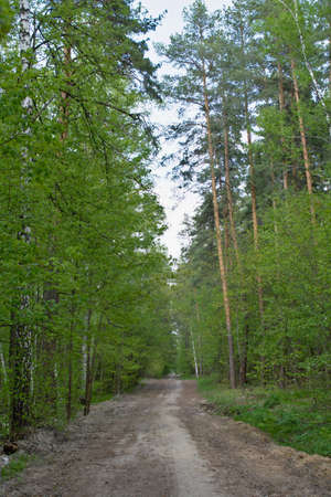 The forest path in the spring forest is especially beautiful in the young and bright greenery. Фото со стока
