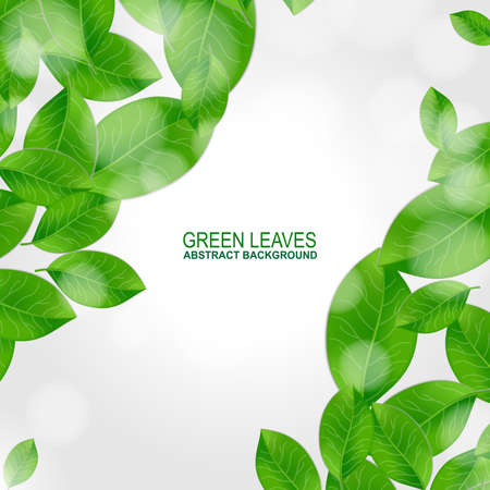 natural beauty: Background with fresh green leaves