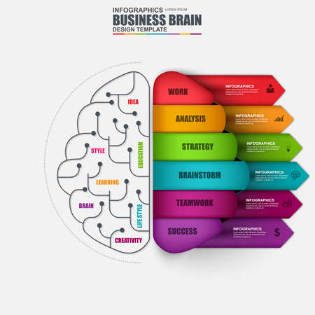 Infographic brain vector design template. Can be used for workflow layout, data visualization, business brainstorming concept with 6 options, parts, steps, banner, diagram, chart, web design.