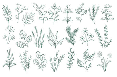 Bundle of floral decorative elements. Botanical doodles set, floral design pack. Green leaves, flowers, herbs and branches vector illustration. Perfect for invitations, greeting cards and brochures. Stock Illustratie