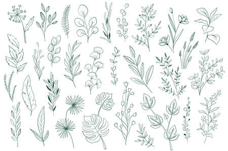 Botanical elements, outline graphic pack. Plants set in sketch style vector illustration. Green leaves, wildflower and herbs ornament. Perfect for invitations, greeting cards, floral patterns design