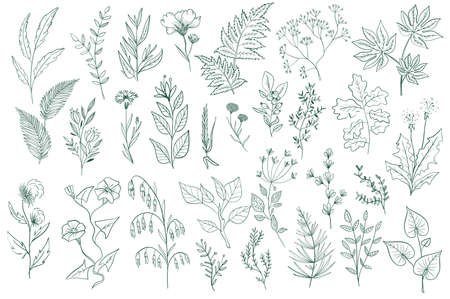 Wildflower decorative outline elements set. Green foliage, branches, flowers and herbs vector illustration. Isolated pack of botanical clipart. Perfect for invitations, greeting cards, posters, prints