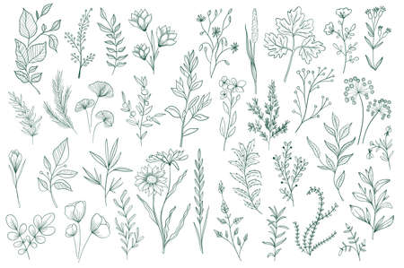 Bundle of hand drawn floral decorative elements. Botanical clipart, floral design pack. Green leaves, flowers, herbs and branches vector illustration. Perfect for wedding invitations, greeting cards.