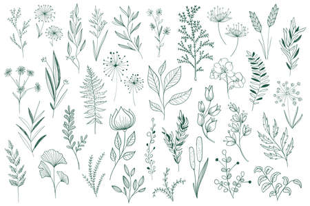 Hand drawn floral decorative elements set. Isolated pack of botanical clipart. Green leaves, flowers and herbs vector illustration. Perfect for wedding invitations, greeting cards, tattoo and prints.