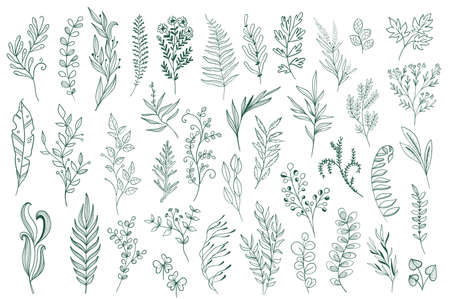 Hand drawn floral decorations. Botanical design pack, plants set outline vector illustration. Green leaves, flowers, herbs and branches sketches. Perfect for invitations, greeting cards and typography