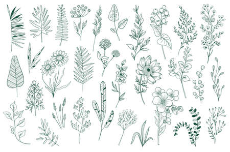 Wildflower decorative outline elements set. Isolated pack of botanical clipart. Green foliage, branches, flowers and herbs vector illustration. Perfect for invitations, greeting cards, tattoo, prints Stock Illustratie