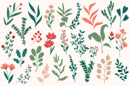 Floral decorations set for Christmas postcards. Botanical clipart isolated collection. Plants, flowers and herbs vector illustration. Perfect for winter holidays greeting cards, booklets and banners.