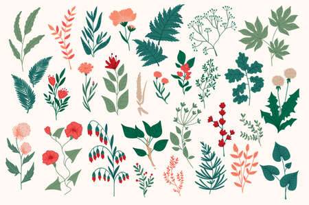 Wildflower decorative elements set. Colorful flowers, branches and herbs vector illustration. Isolated pack of botanical clipart. Perfect for Christmas invitations, greeting cards, posters, prints. Stock Illustratie