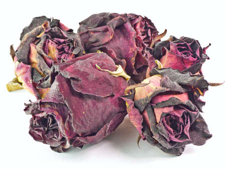 The isolated 5 dry buds of red roses photo