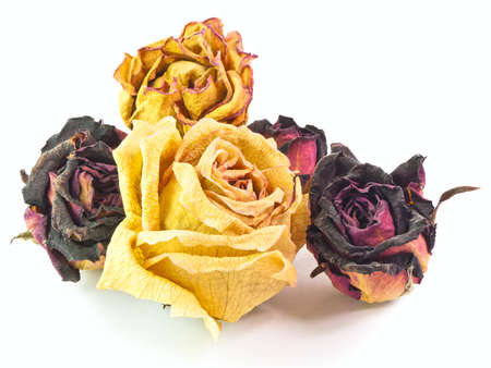 dried flower arrangement: The isolated 5 dry buds of red and yellow roses