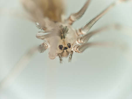 paunch: Macro Photo of a paunch of a small spider, soft focus