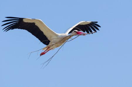 Stork in its natural habitat, shallow depth of field