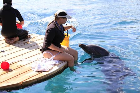 Eilat-Israel October 29, 2011: Woman and dolphin in a water. Redakční