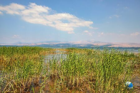 Kinneret Lake - Sea of Galilee coastal strip with bushes
