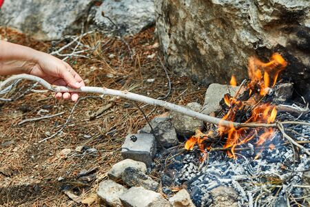The bonfire is bred in a spruce forest of branches and cones. Stones are lined around. Childrens hand with a branch. Stock Photo