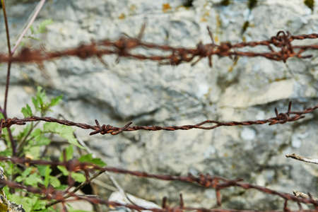 Rusty barbed wire on a background of stone and plants. 版權商用圖片