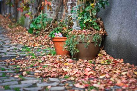 Straßen mit Blumentöpfen auf Patershol, Gent Standard-Bild - 71725835
