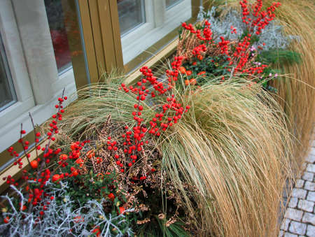 Red decorative berries in cafe flowerbeds