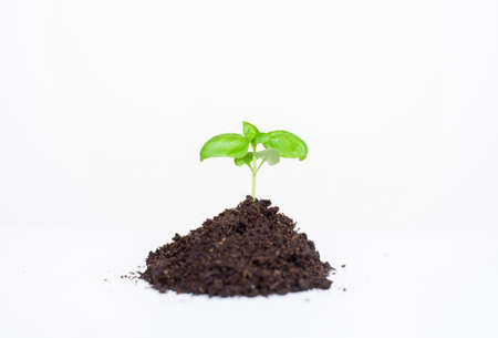 Young seedling plant in the ground on a white background Reklamní fotografie