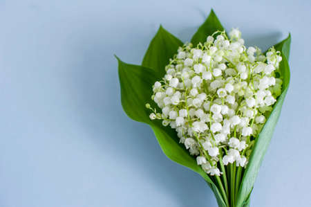Bouquet of lily of the valley on a blue background close-up. Top view, empty space for text.