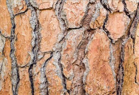 Large beautiful brown pine bark. Close-up. Texture Standard-Bild