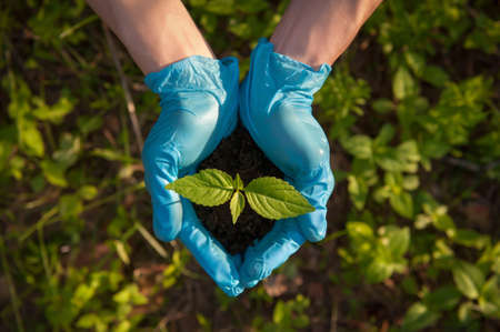 A man holds a young plant with soil in his hands. The concept of protection and conservation of nature. Earth day