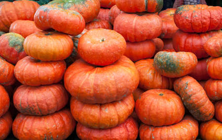 Many ripe orange pumpkins lie on the street. Selling vegetables at the market. background
