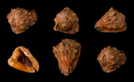 Large seashell on black background isolated, shot from six angles close-up Banque d'images