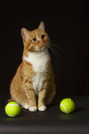 red cat on a black background with tennis balls