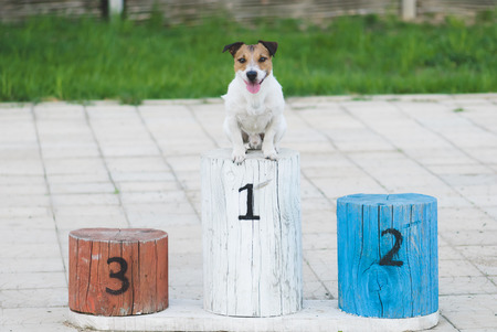 Champion dog on a pedestal gets award for winning the first place