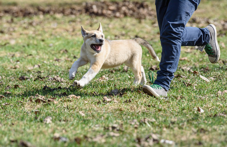 Boy jogging with cute happy fluffy puppy at park