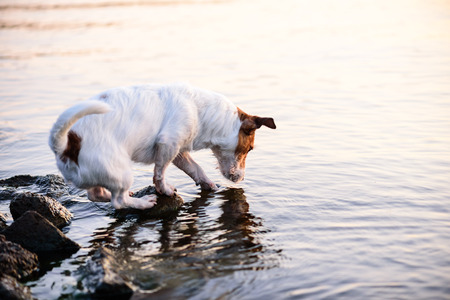Dog scratching water surface looking for fish in river
