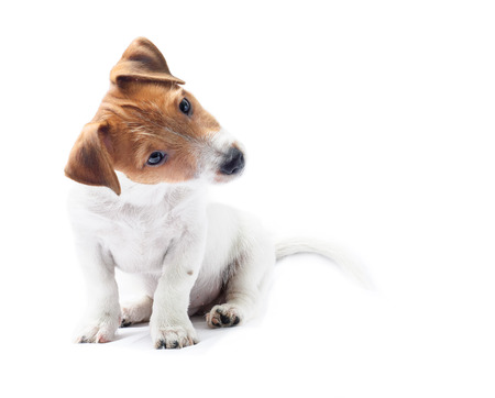 Nieuwsgierig sitting dog puppy tilt hoofd funny Stockfoto
