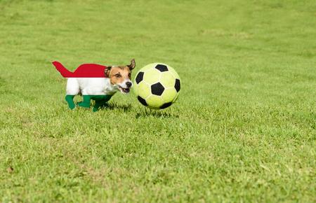 strives: Hungarian team strives for win European Football Championship in France