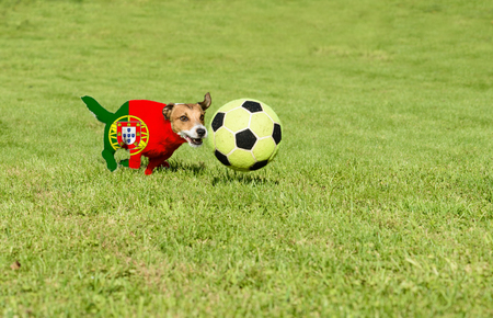 strives: Portuguese team strives for win European Football Championship in France Stock Photo